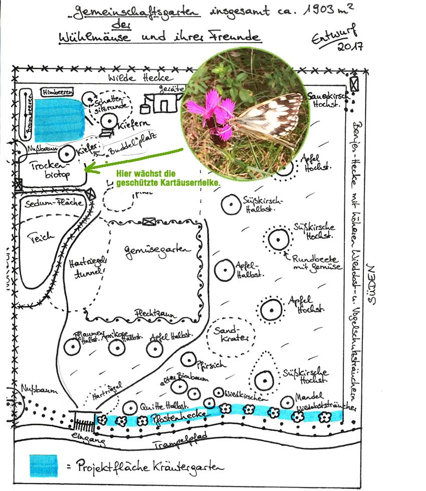 Krautergarten Projekt Grunkraft